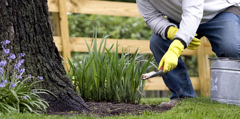 planting organic fertilizer to your plants