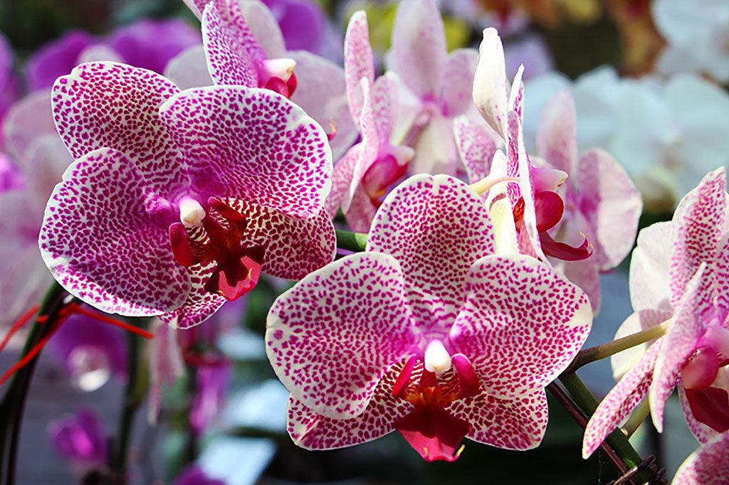 exotic flowers header vanda orchid