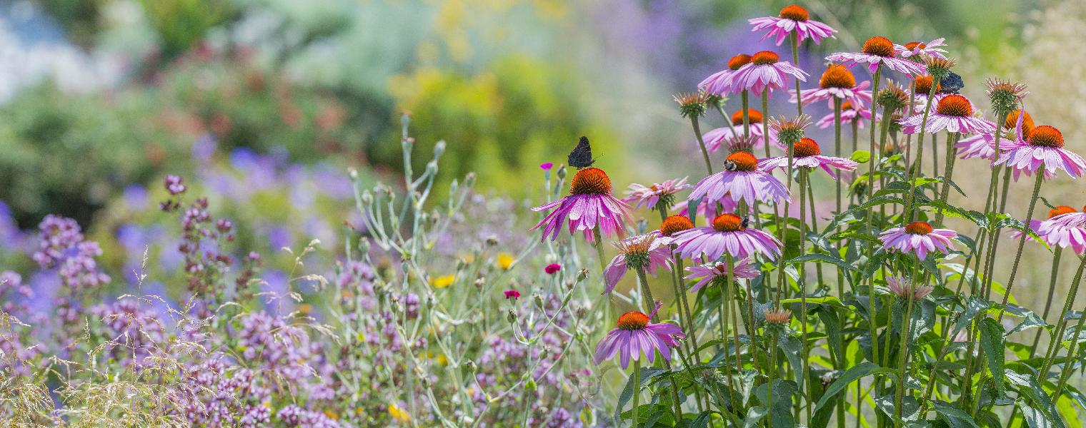 Planting Pollinator Friendly Garden Living Color Fort Lauderdale Floridaimage 03b