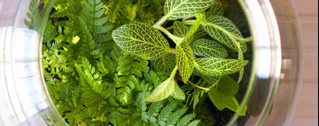 the-best-terrarium-plants-for-diy-container-arrangements-fern