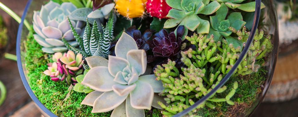 the-best-terrarium-plants-for-diy-container-arrangements-succulents