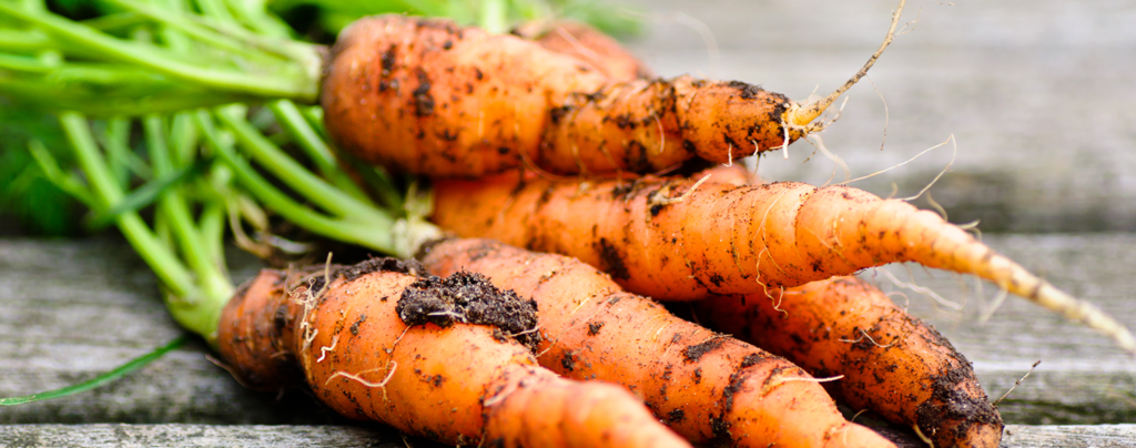 how-to-grow-your-own-food-with-container-vegetable-gardening-fresh-carrots-macro