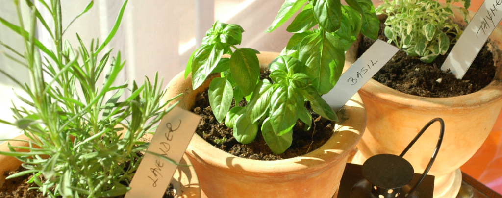 how-to-grow-your-own-food-with-container-vegetable-gardening-indoor-herb-garden