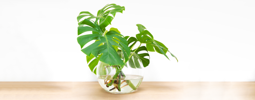 water-plants-everything-you-need-to-know-vase-on-table