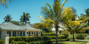palm-tree-planting-and-care-header