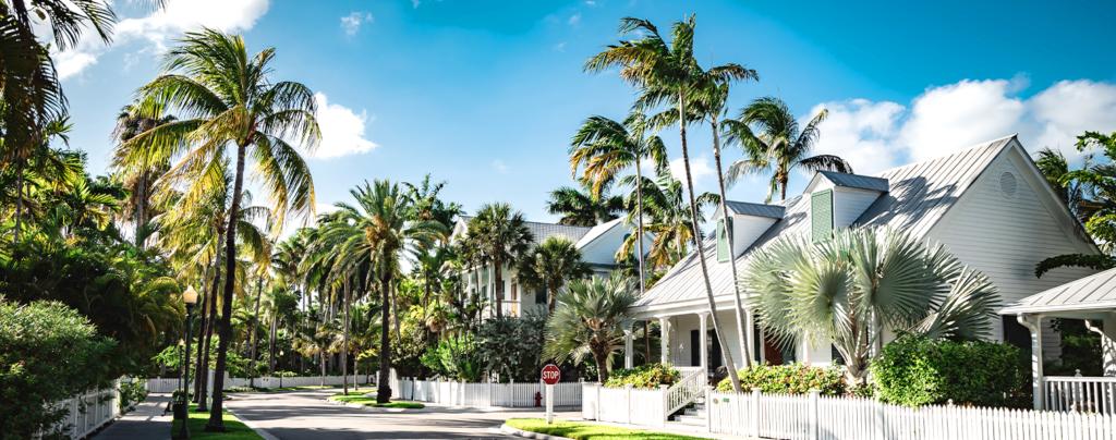 palm-tree-planting-and-care-neighborhood