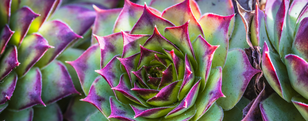 the-9-best-succulents-for-your-collection-bright-Echeveria