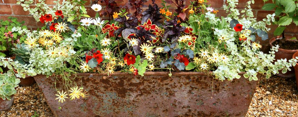 6-container-garden-ideas-for-landscaping-vintage-trough-garden