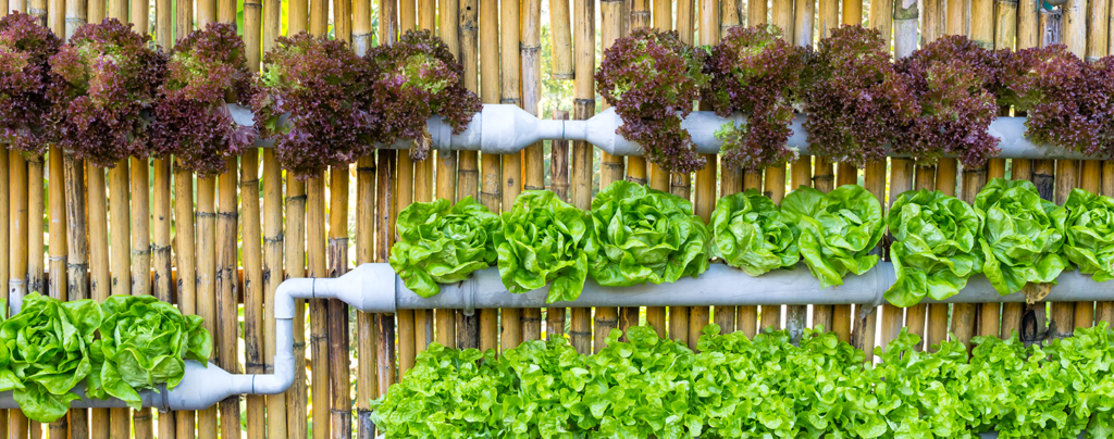 everything-you-need-for-growing-an-edible-living-wall-lettuce-in-pipes-wood-background