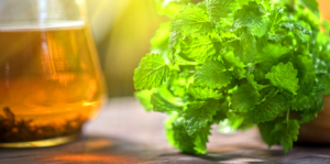 florida-tea-garden-mint-family-fresh-herbal-tea-header