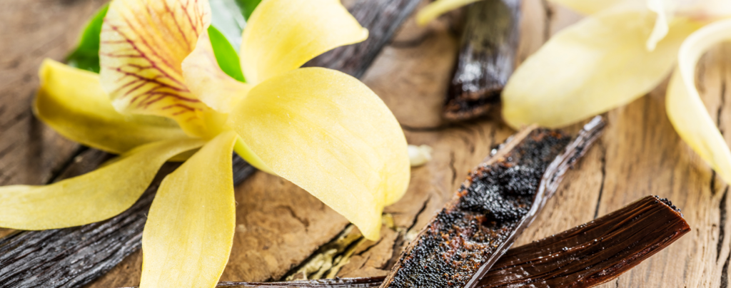 vanilla-orchids-orchid-and-vanilla-beans
