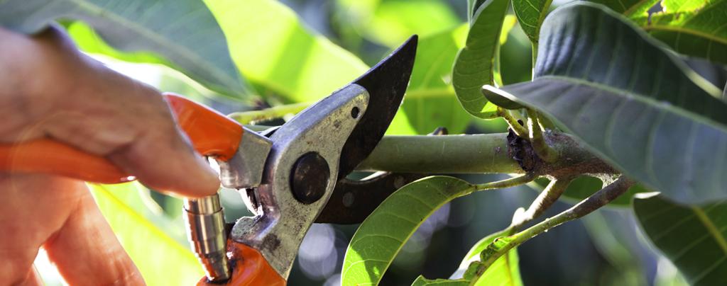summer-florida-garden-pruning-living-color
