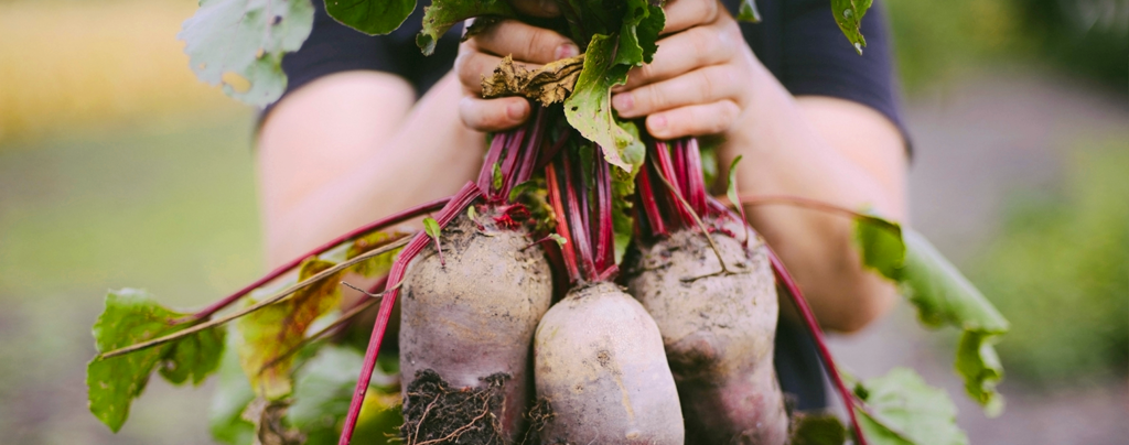 living-color-favorite-cool-season-fruits-veggies-person-holding-beets