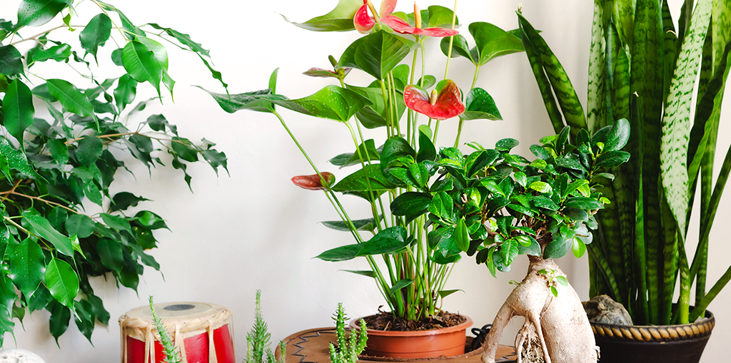 living-color-favorite-tropical-houseplants-header