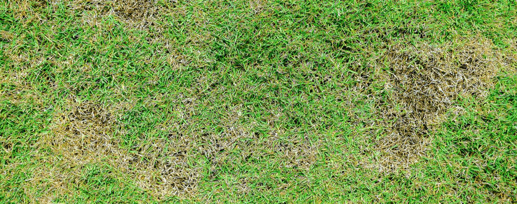 living-color-control-lawn-brown-patch-grass
