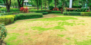 living-color-control-tropical-lawn-large-brown-patch