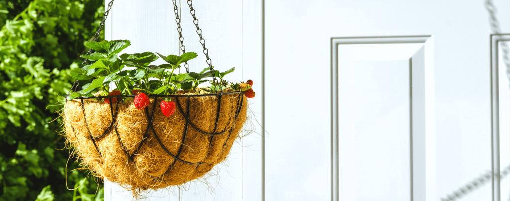 living-color-2021-garden-landscape-design-trends-strawberry-plant-foodscaping