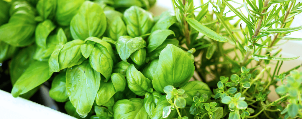 living-color-edible-container-gardening-ideas-basil-thyme