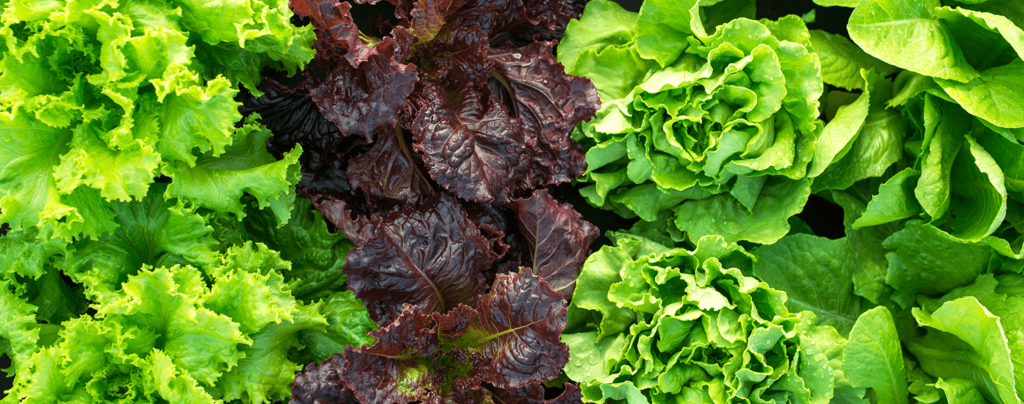 living-color-edible-container-gardening-ideas-different-lettuce-plants