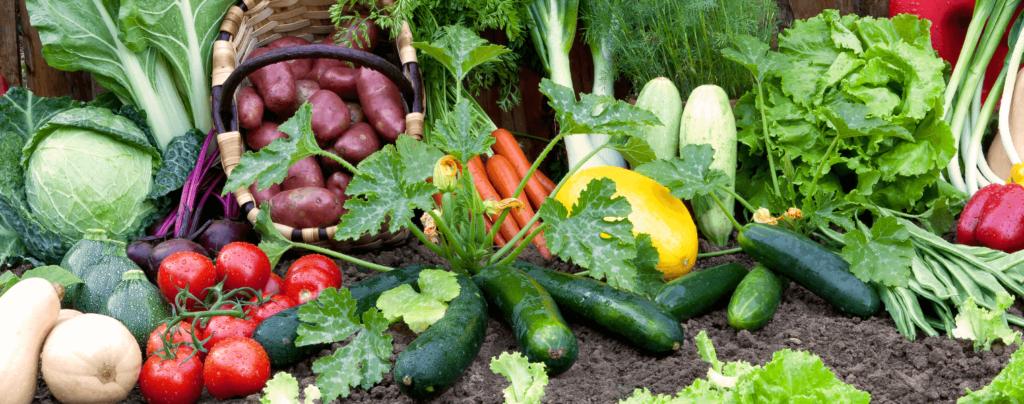 living-color-january-planting-calendar-many-vegetables