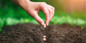 living-color-january-planting-calendar-planting-bean-seeds