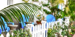 living color best fertilizers tropical fruits flowers palm tree leaves
