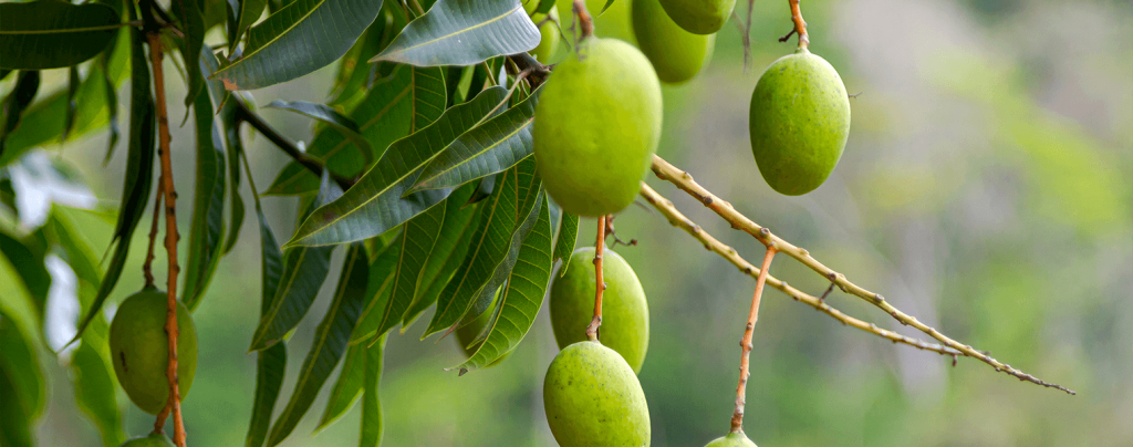 living color best fertilizers tropical fruits flowers palms mango tree