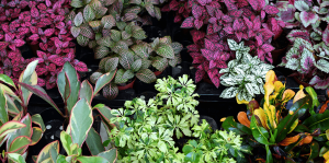 living color benefits of groundcover plants colorful foliage