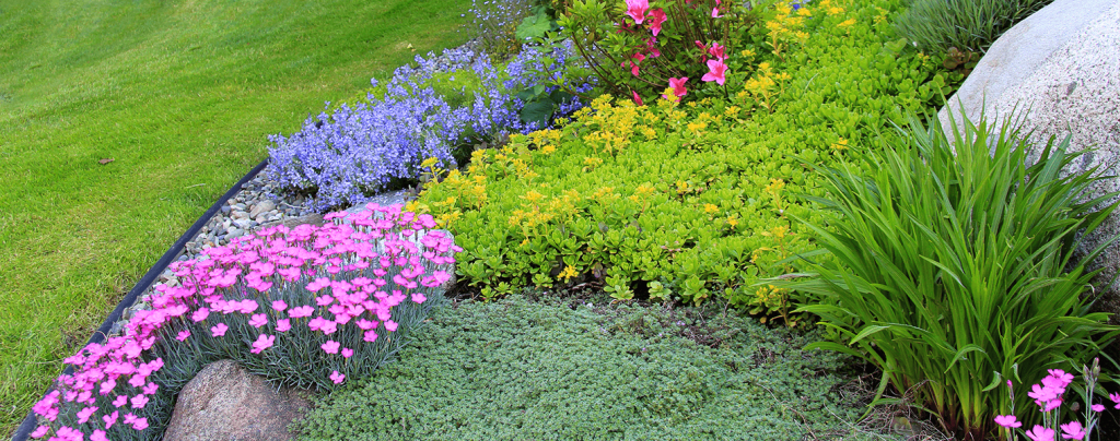living color benefits of groundcover plants landscaping yard
