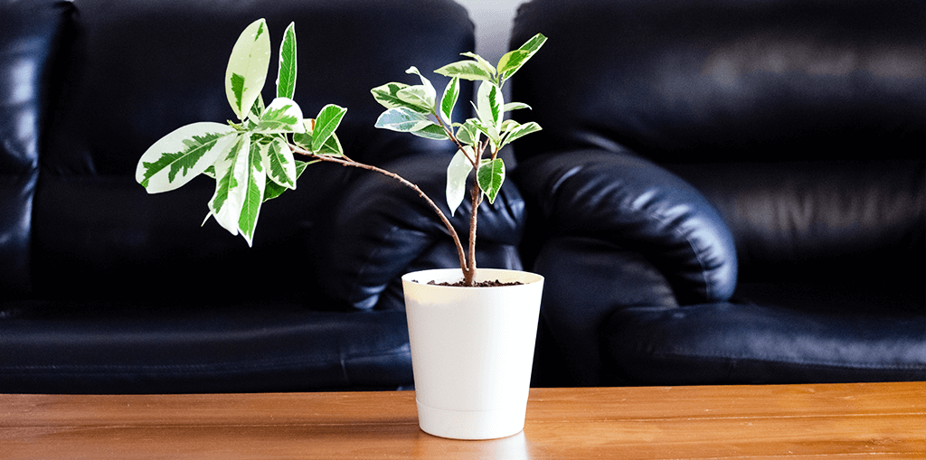 living color garden center self watering pot with plant on coffee table
