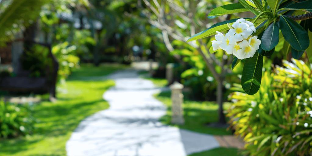 living color garden center caring for plumeria florida sidewalk plumeria branches