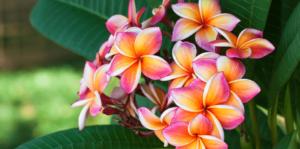 living color garden center feature thumbnail