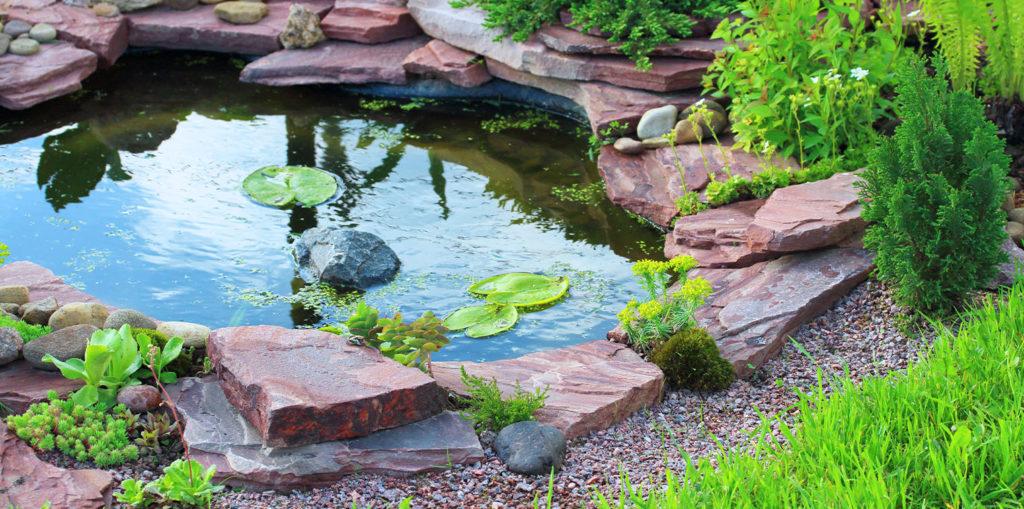 living color garden center backyard pond