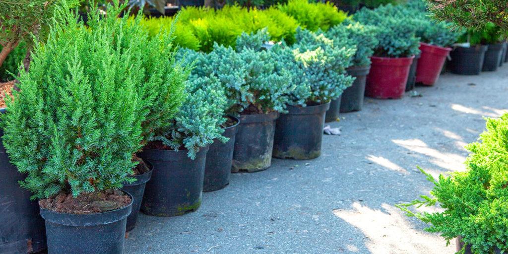 shrubs in nursery Living Color garden center